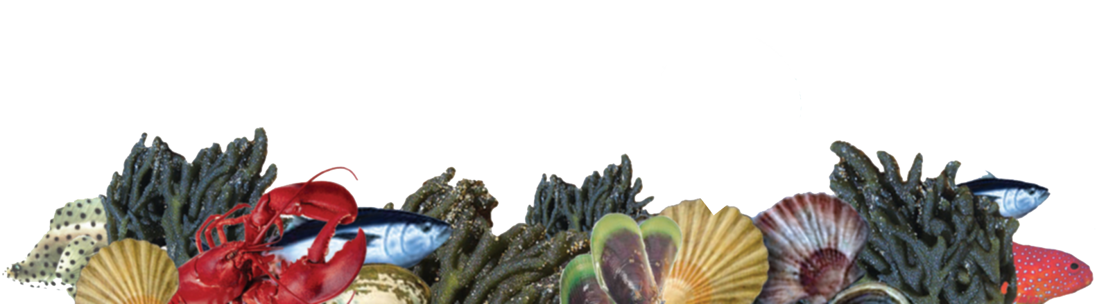 Aqua Gardens - live, or fresh and natural seafood, consistent quality, delivered daily, to your door